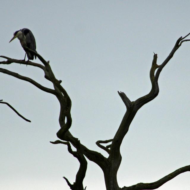 """Three Herons"" stock image"