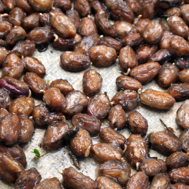 """""""Germinating cocoa beans"""" stock image"""