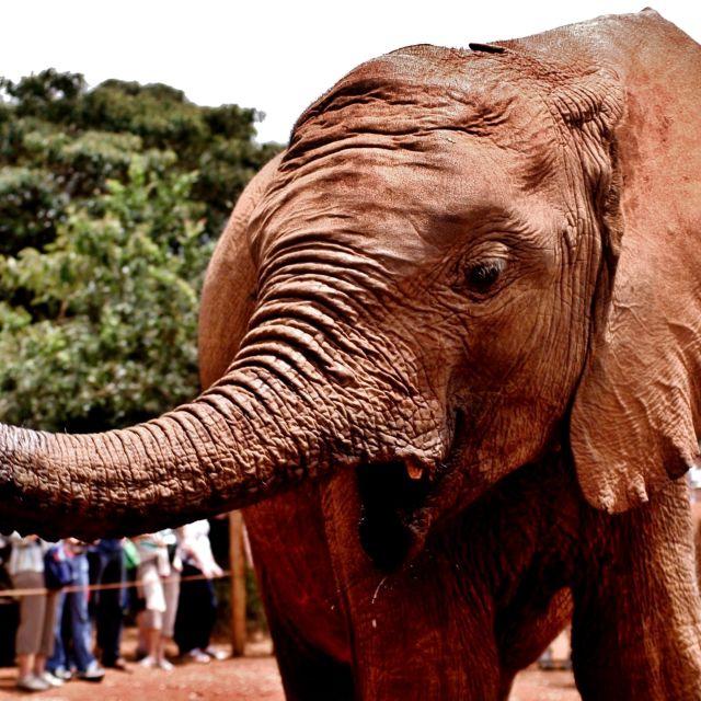 """""""Elephant Orphan"""" stock image"""