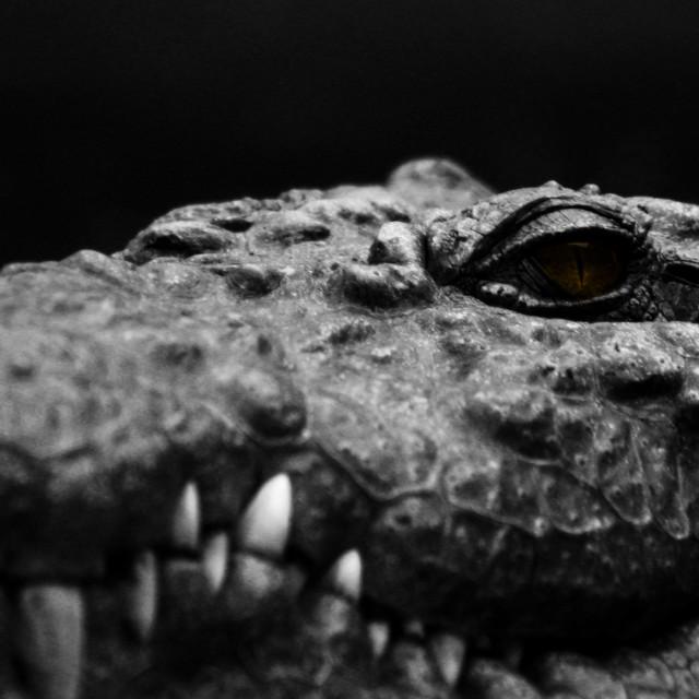 """""""Croc eye"""" stock image"""