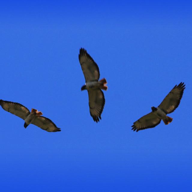 """Birds in flight"" stock image"