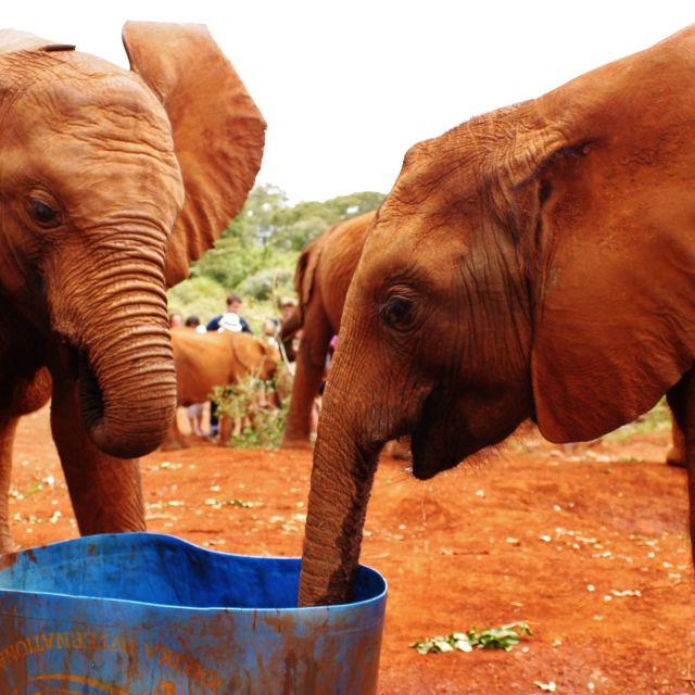 """""""Elephant Orphanage"""" stock image"""