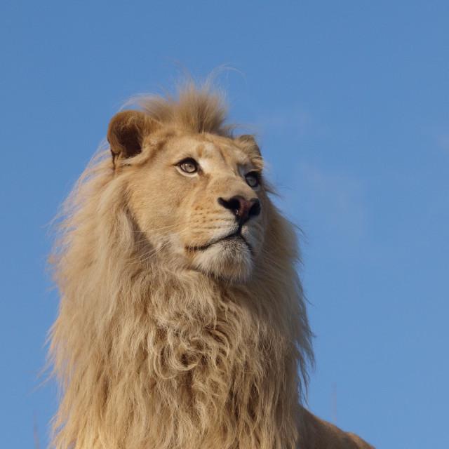 """Sky Lion"" stock image"