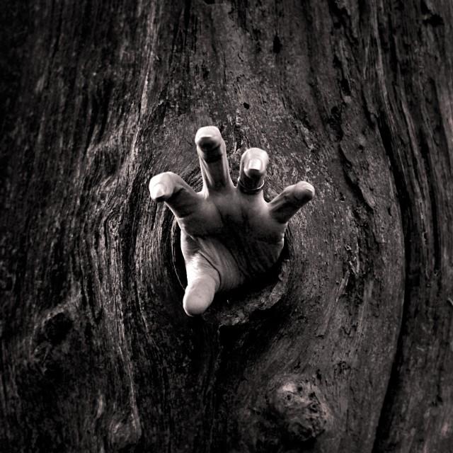 """Tree Hand"" stock image"