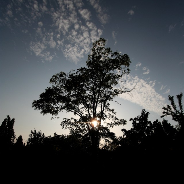 """Late summer evening silhouette"" stock image"