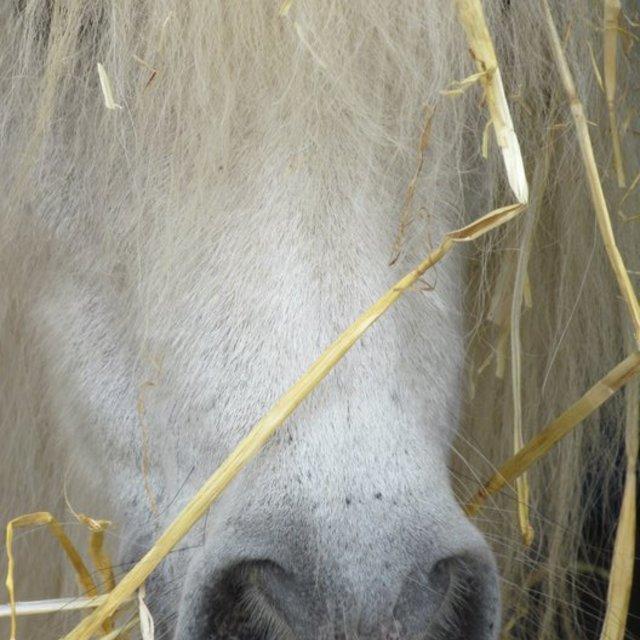 """""""Hay Pony"""" stock image"""