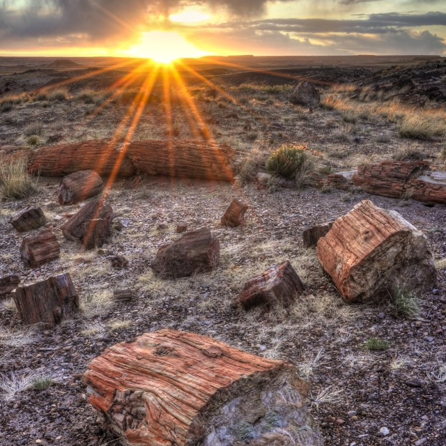 """""""Sunset in the Petrified Forest"""" stock image"""