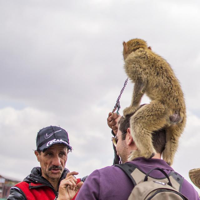"""Jemaa El Fna Monkeys"" stock image"