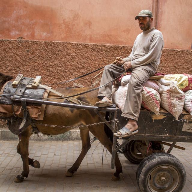 """""""Donkey With Shades"""" stock image"""