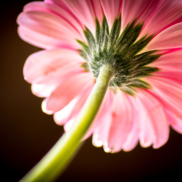 """""""Flower view"""" stock image"""