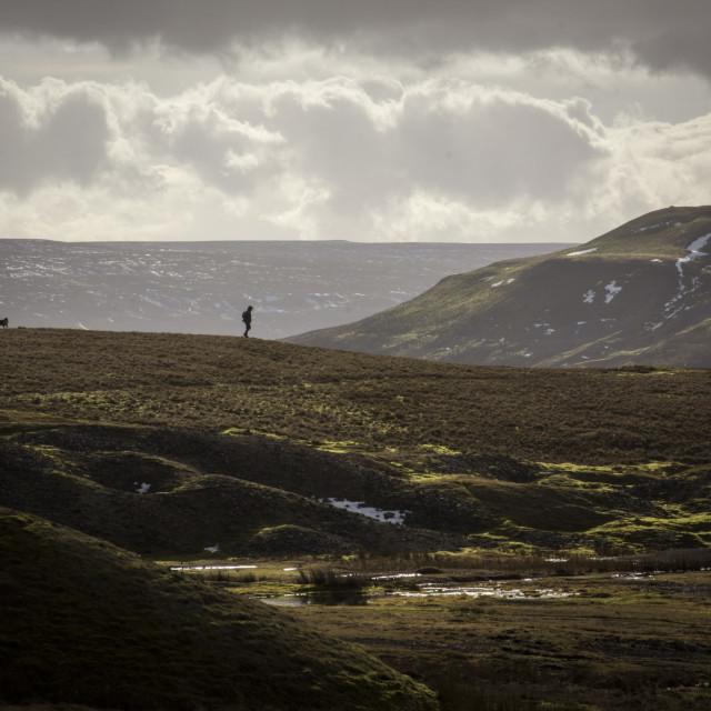 """Dog Walking on the mountains"" stock image"