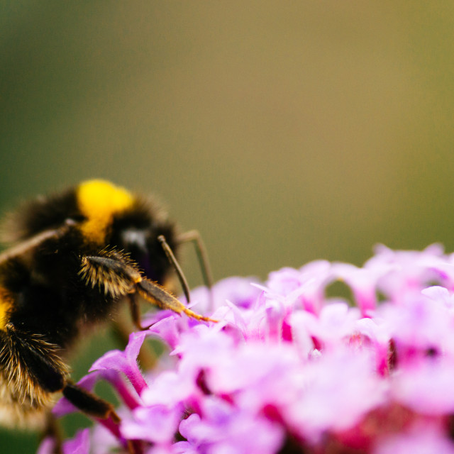 """""""Bee on top"""" stock image"""