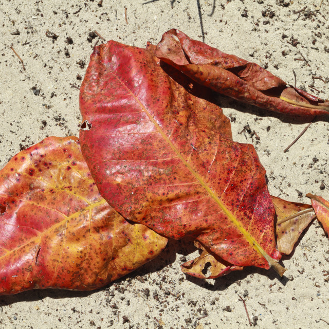 """""""Autumn leaves on the beach"""" stock image"""