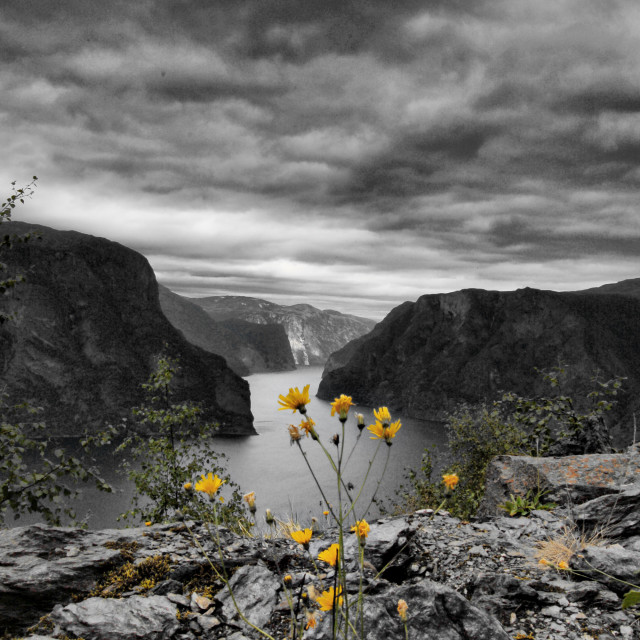 """""""Yellow flowers on the cliff"""" stock image"""