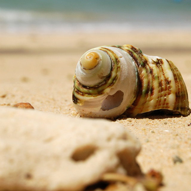 """Sea shell"" stock image"