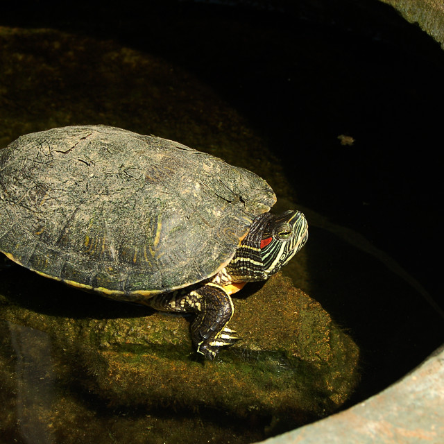 """Turtle"" stock image"