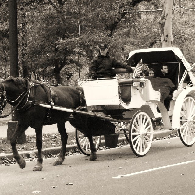 """Horse Drawn Carriage"" stock image"