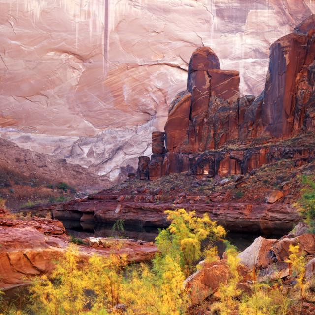 """Cow Canyon"" stock image"