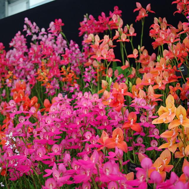 """Hampton Court Flower show display"" stock image"