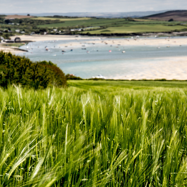 """""""Fields above Padstow"""" stock image"""