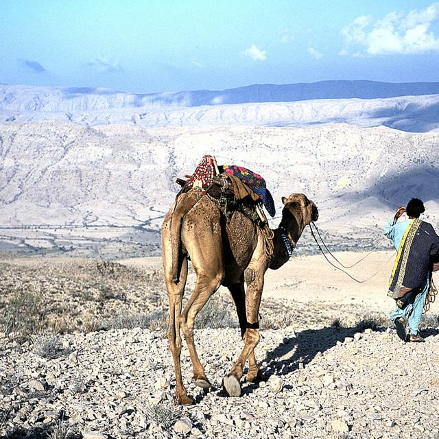 """""""Desert Traveller"""" stock image"""