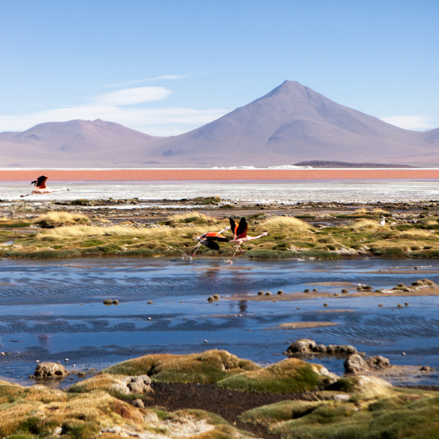 """Red Lagoon with Flamingos in Bolivia"" stock image"