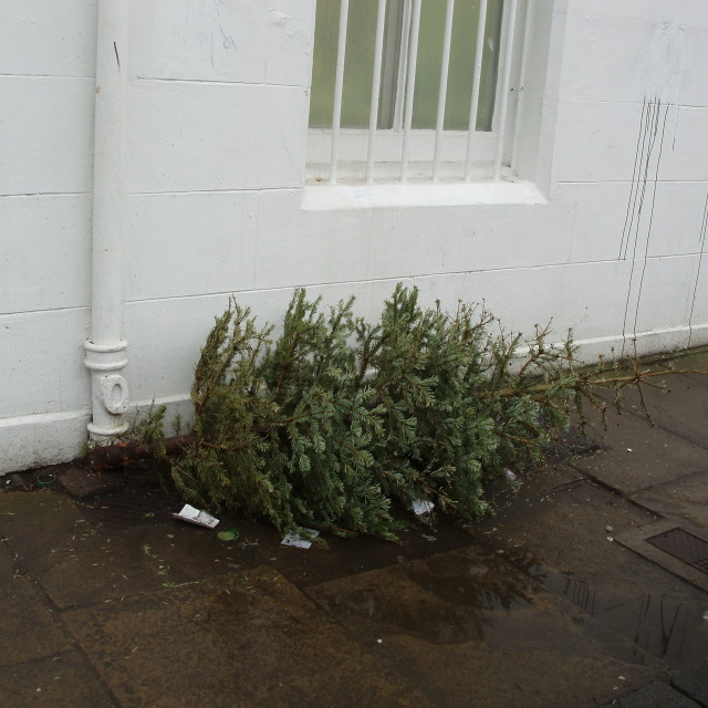 """Discarded Christmas Tree"" stock image"