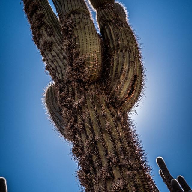 """Cactus Against Blue Sky"" stock image"