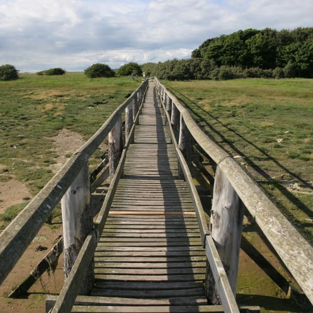 """Bridge at nature reserve"" stock image"