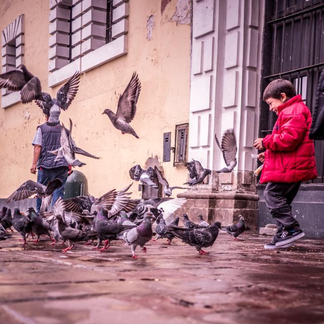 """Boy Feeds the Birds"" stock image"