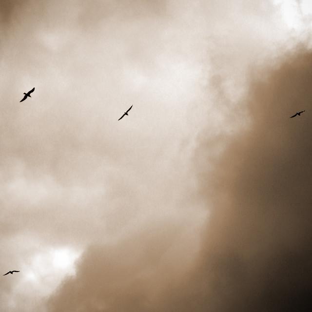 """""""6 Gulls"""" stock image"""