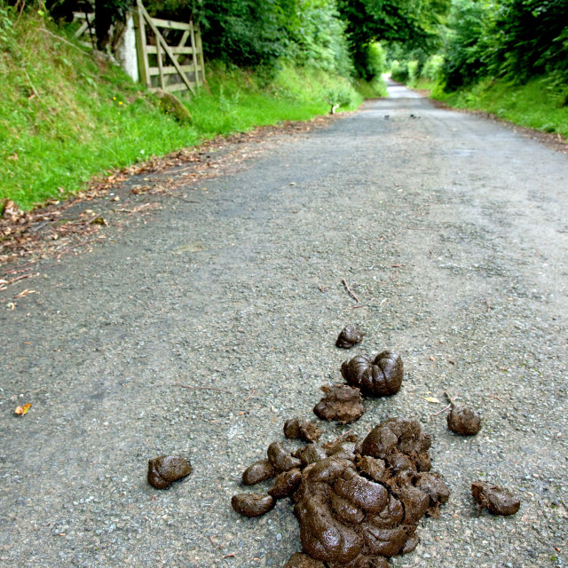 """Country Road Hazards"" stock image"