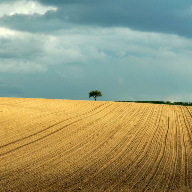 """Rural Landscape ."" stock image"