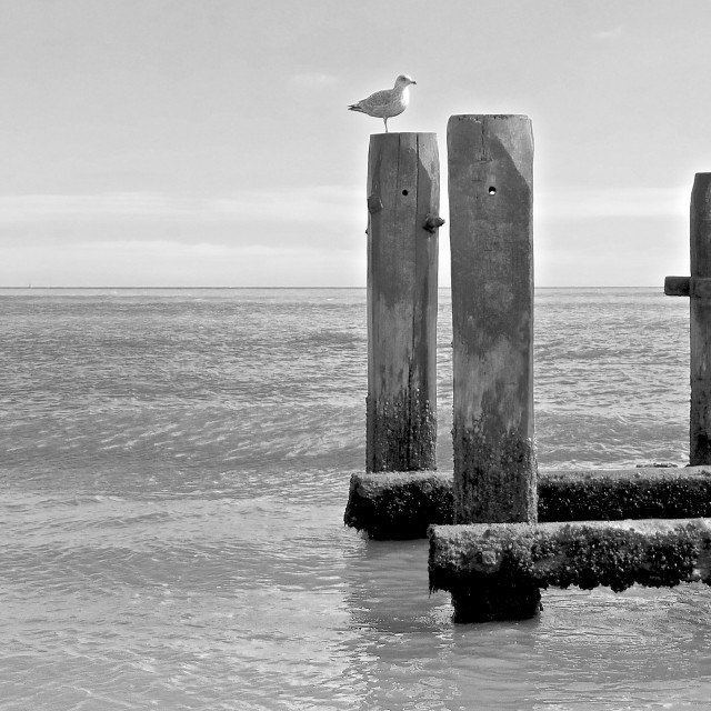 """""""Lonely Gull"""" stock image"""
