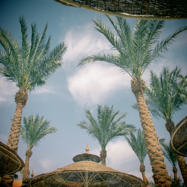 """""""Palm trees and umbrellas with toy camera effect"""" stock image"""