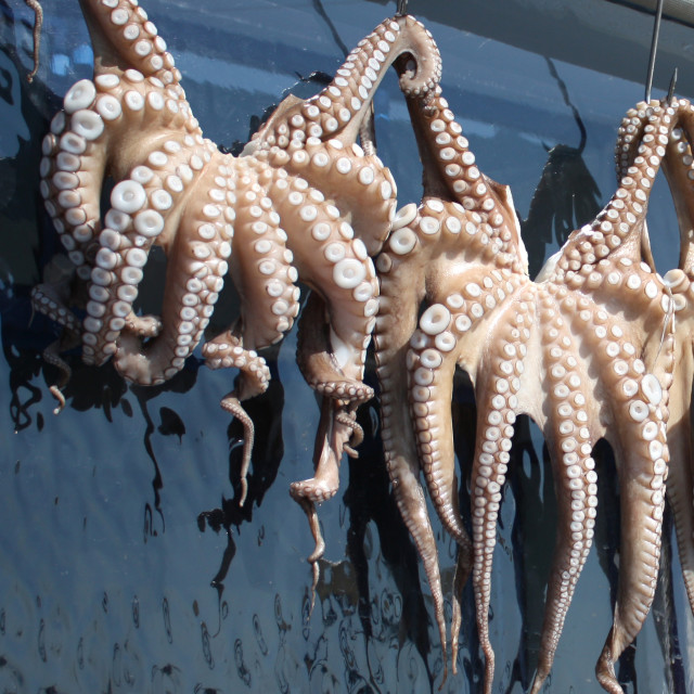 """Octopuses"" stock image"