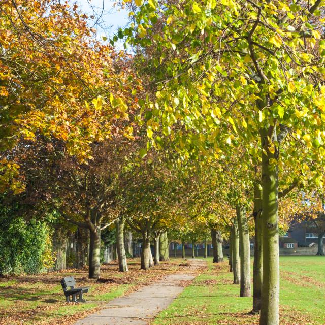 """Park in Autumn"" stock image"