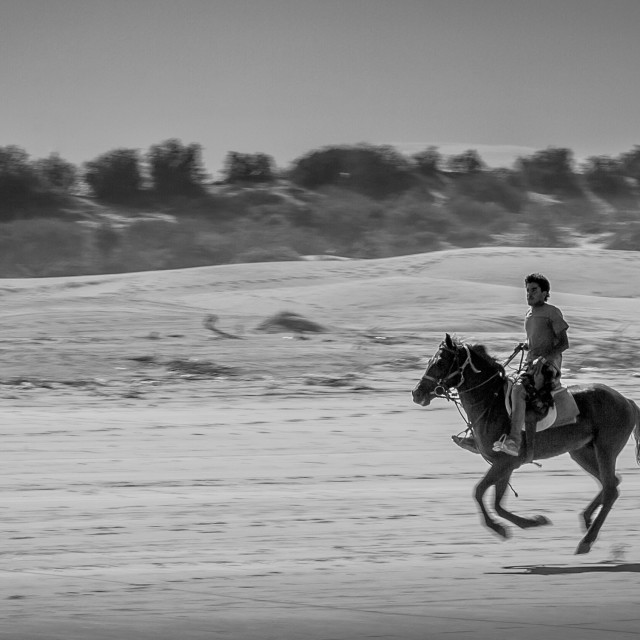 """""""At the gallop"""" stock image"""