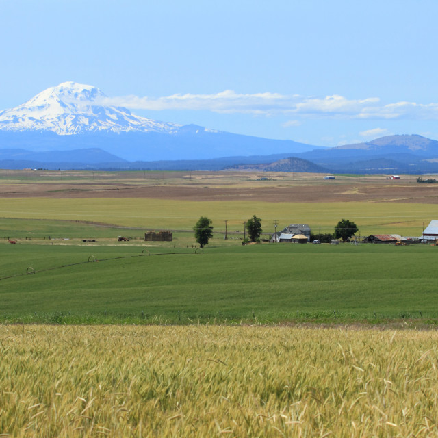 """Mount Adams and farm fields"" stock image"