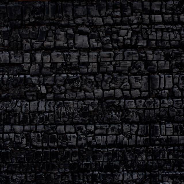 """""""Burnt log wall"""" stock image"""