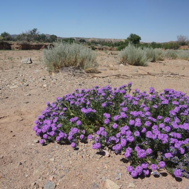"""Purple Flowers,"" stock image"
