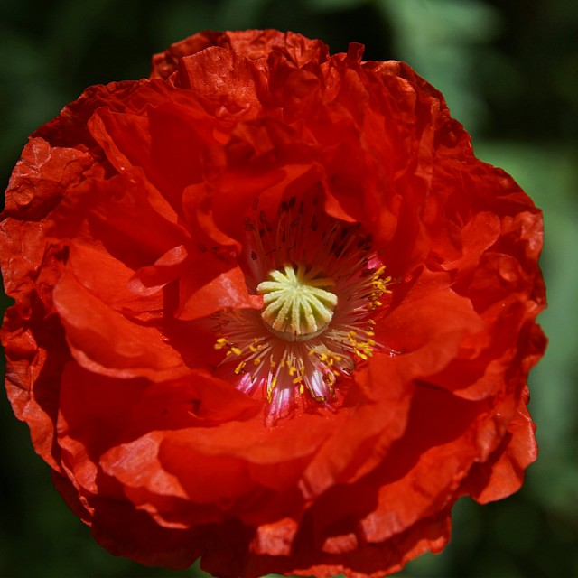 """Red Flower 1"" stock image"