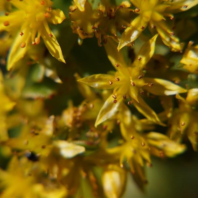 """Yellow Wild Flowers"" stock image"