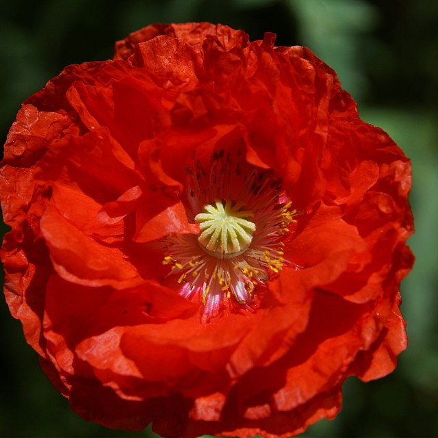 """""""Red Flower 2"""" stock image"""