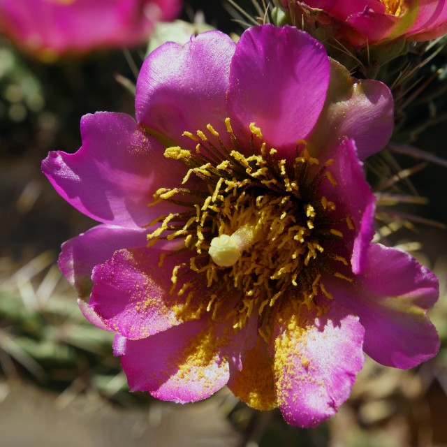 """Pink Flower 2"" stock image"