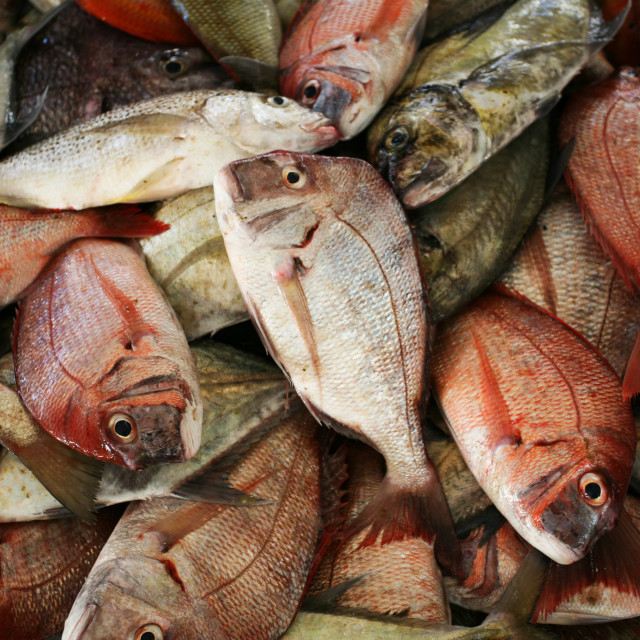 """Pile of Fish"" stock image"