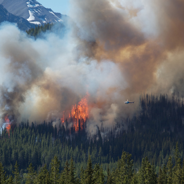 """Forest fire in the Rocky Mountains"" stock image"