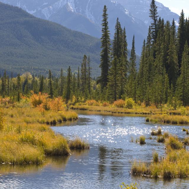 """Vermilion Lakes in autumn"" stock image"