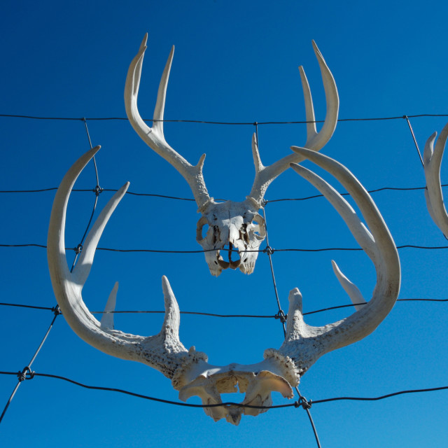 """Antlers on fence"" stock image"