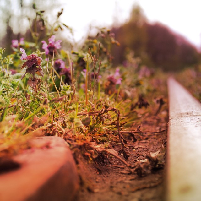 """Flowers growing on abandoned train track"" stock image"